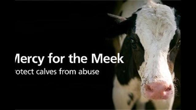 USDA shuts down plant over abuse of veal calves