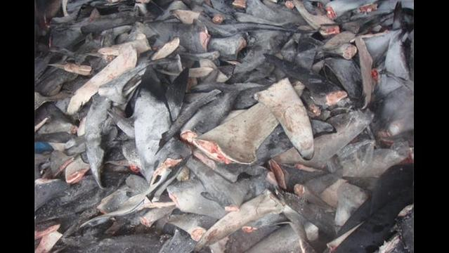 Is China finally saying no to shark fin soup?