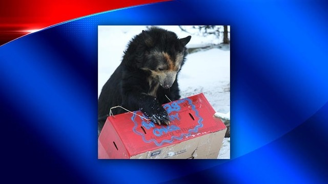 Binghamton Zoo mourns loss of Chica, 28-year-old Andean bear